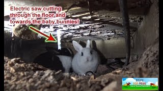 We had to use an electric SAW to save this family of homeless bunnies!!! DANGEROUS RESCUE!!! by Hope For Paws