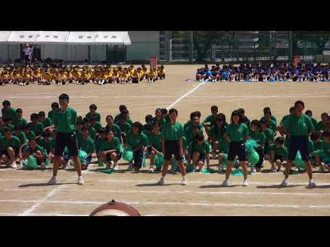 2018年 雲雀丘学園中学校体育大会 応援合戦 緑団