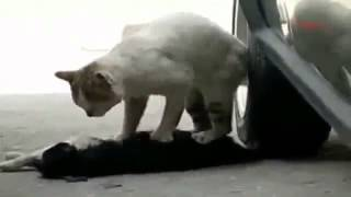 VIDEO ME PREKSE NE BOT (8GAG-SHQIP)