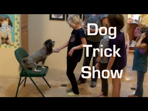 Jasmine Does Cute Dog Tricks for Girl's Birthday Party!