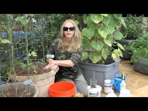 how to fertilize cucumbers