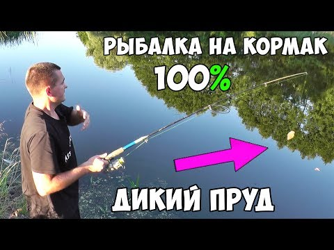 рыбалка на карася на кормаки