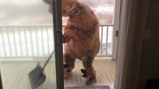 T-Rex Trying to Shovel Snow Is My Spirit Animal on a Hungover Sunday Morning When I'm Trying to Stay Alive