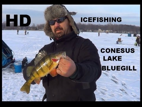 ICE FISHING CONESUS LAKE BLUEGILL