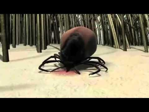 Tick Lifecycle.mp4