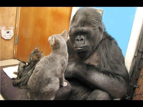 Kokos Kittens are Growing