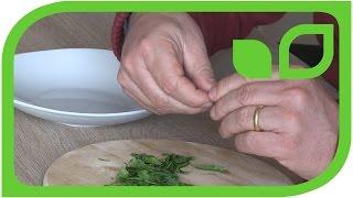 Selber Grüntee herstellen: Das Rollen der Teeblätter