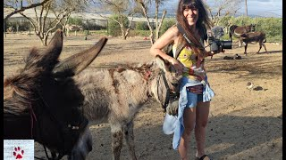 Donkey love ❤️| Top 5 places to visit and spend time with rescue donkeys in Greece by The Orphan Pet