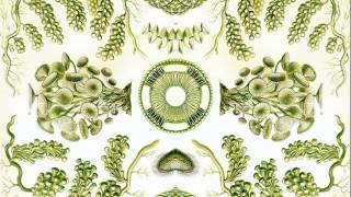 Meerkut - Plante Verte