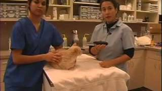 How to Flea Comb - Cat- LazyPaw Animal Hospitals
