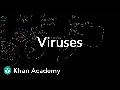 virus - Learn more: http://www.khanacademy.org/video?v=0h5Jd7sgQWY Introduction to viruses.