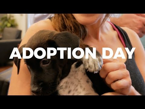 New Jersey Puppy Adoption - Ruff Rehab and Ramsey Subaru