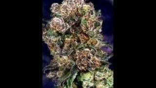 Ludacris-Blue Berry Yum Yum