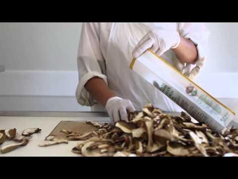 Lavorazione dei funghi