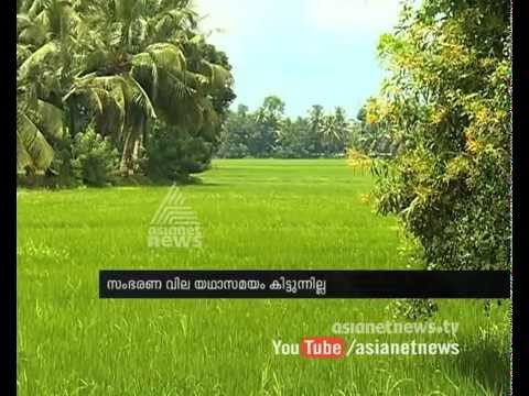 Paddy storage fails after inefficiency of civil supplies corporation 04 August 2015 08 46 PM