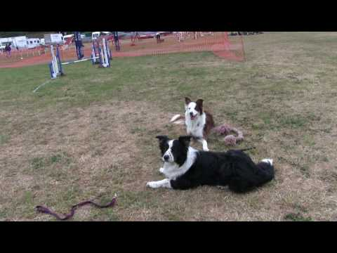 Practise ring Dog Vegas