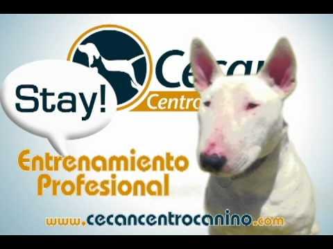 "ESCUELA PARA PERROS ""CECAN CENTRO CANINO"" TIJUANA, BC MEXICO"
