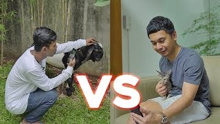 Video RADIT KUCING VS PANDU KAMBING! SIAPA MENANG? MP3, 3GP, MP4, WEBM, AVI, FLV Maret 2018