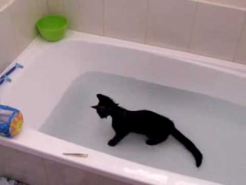 The Water loving Cat