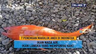 Video 7 Penemuan Makhluk Aneh Di Indonesia ~ On The Spot Trans 7 Terbaru MP3, 3GP, MP4, WEBM, AVI, FLV Mei 2018