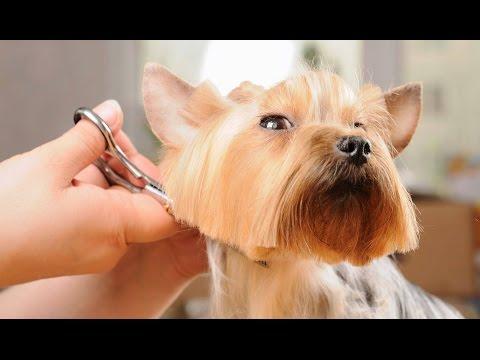 Что такое мобильный салон красоты для собак