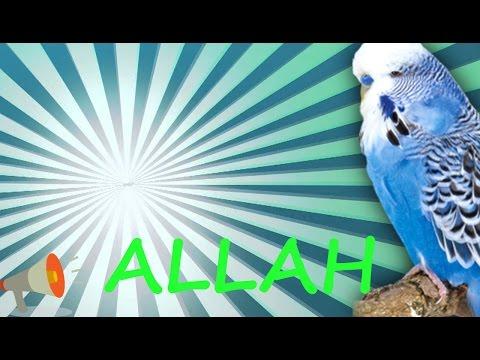 Video ALLAH Muhabbet Kuşu ve Papağan Konuşturma Sesi hazır ses kaydı  1 saat download in MP3, 3GP, MP4, WEBM, AVI, FLV January 2017