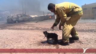 Mexican Fireman Watering Down Cat After Fire