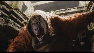 Trailer of The Jungle Book (2016)