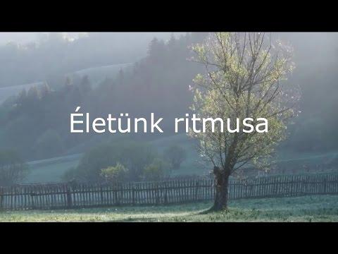 Életünk ritmusa - Dr. Demény János