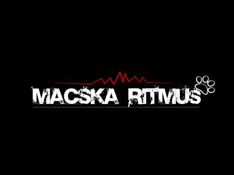 Macskaritmus - NokiBroki