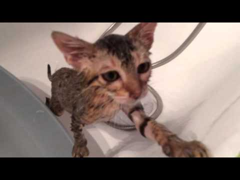 comment nettoyer un chat qui n'aime pas l'eau