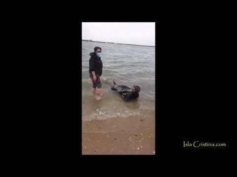 Salvamento cría Delfín en Isla Cristina