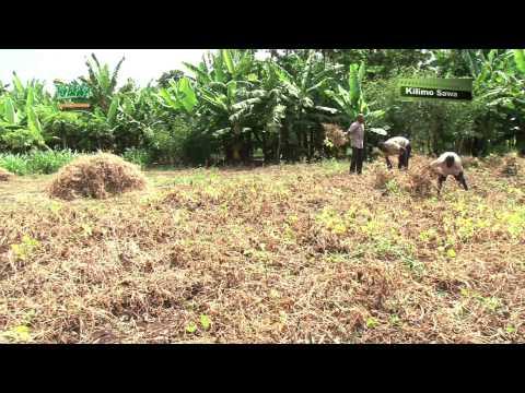 Kilimo Sawa: Ukulima Bora wa Maharagwe wa kawaida
