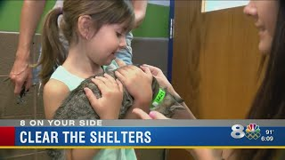 Thousands of pets find homes in Tampa Bay through Clear the Shelters campaign