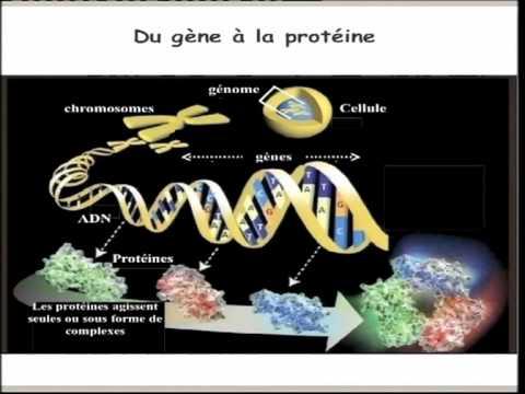 Marina Cavazzana-Calvo – Soigner des maladies génétiques grâce au VIH ?