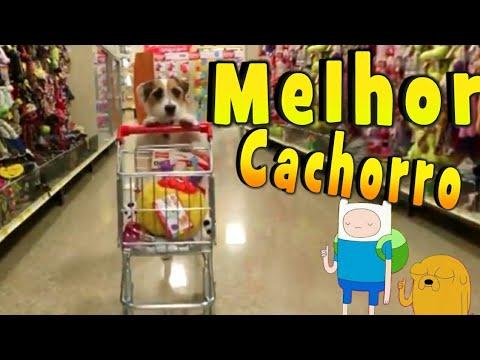 Piadas engraçadas - O MELHOR CACHORRO DO MUNDO -POR ESSA ninguém ESPERAVA !!!!!