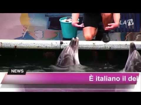 Il delfino parlante