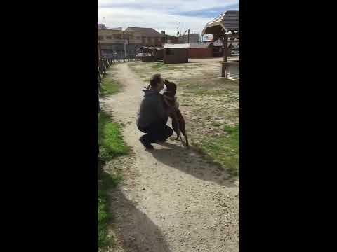 Właściciel odnajduje swojego psa po 3 latach