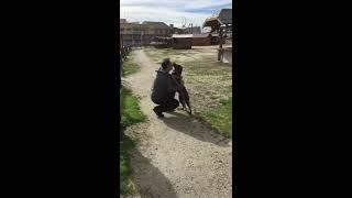 Po 3 latach odnalazł swojego psa, który oszalał ze szczęścia gdy go rozpoznał