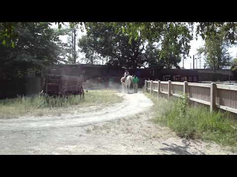 Horse Rides at the Philadelphia Zoo