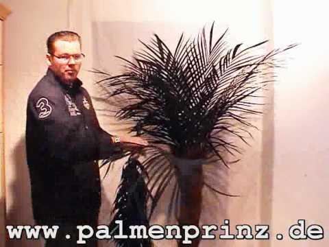 SUPER EINFACH: Aufbau einer Kunstpalme von PALMENPRINZ.de !