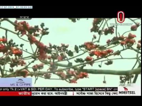 Preparations ahead of Pahela Falgun (12-02-2016)