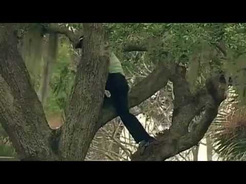 Golf: Sergio García se subió a un árbol para golpear la pelota