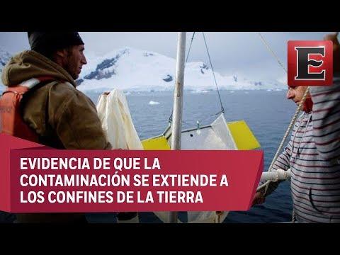 Preocupa a ambientalistas hallazgo de residuos plásticos en la Antártida