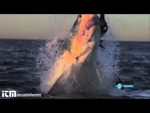 Köpek balığı için yemek zamanı