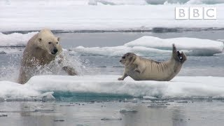 Video Hungry polar bear surprises a seal - The Hunt: Episode 2 Preview - BBC One MP3, 3GP, MP4, WEBM, AVI, FLV Mei 2017