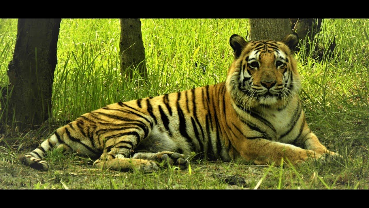 Sundarbans: A Visual Tour