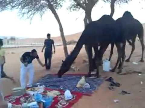 هذي نهاية الاستهبال على البنات - Ƹ̴Ӂ̴Ʒ مجموعة رويال العرب Ƹ̴Ӂ̴Ʒ