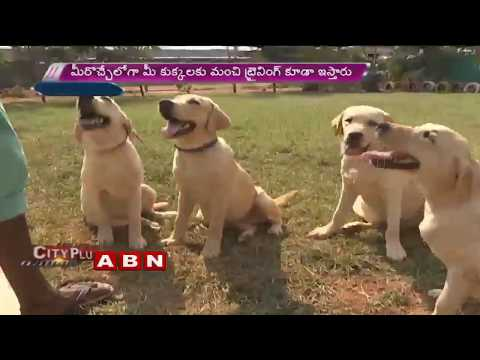 Dog Daycare Centers In Hyderabad | ABN Telugu