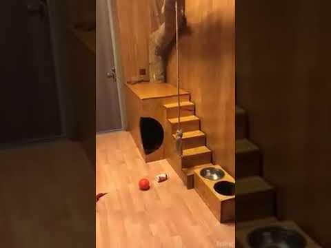Tässä kodissa asustaa hieman isompi kissa